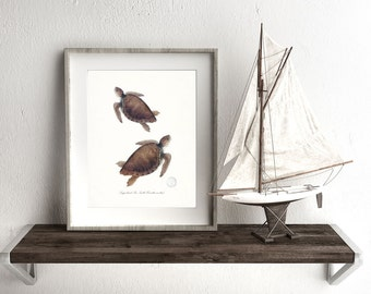 Coastal Decor  -Two Loggerhead Sea Turtles - Endangered Species Natural History Giclee Art Print