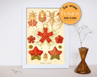 "Vintage illustration from Ernst Haeckel  - framed fine art print, sea creatures,sea life, home decor 8""x10"" ; 11""x14"", FREE SHIPPING 302"