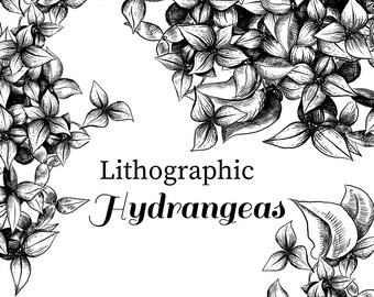 Lithographic Hydrangeas clip art, vintage style floral illustration, hydrangea clip art, wedding clip art, floral hydrangeas clipart, floral