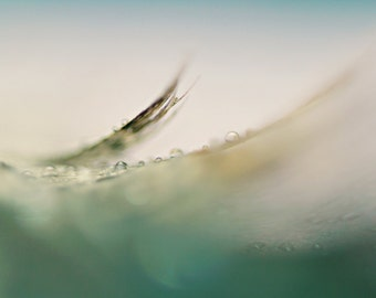 Feather Abstract - 8x10 Fine Art Photograph