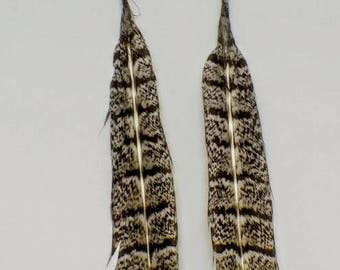 Wild Turkey Feather and Turqoise Earrings