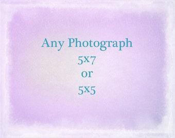 Any Photograph Printed 5x7 or 5x5, The Strange Bird, Seaweed Prints