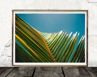 Palm Leaves, Palm Tree Print, Photo, Digital Wall Art, Tropical Print, Botanical Print, Plant Print, Palm Frond,Nature, Summer, Sunshine