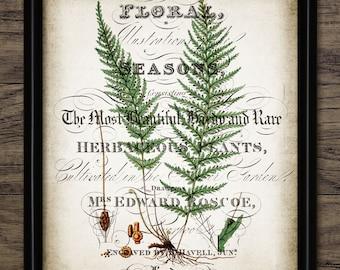 Vintage Fern Print - Fern Illustration - Fern Decor - Botanical - Green Fern Plant - Printable Art - Single Print #1109 - INSTANT DOWNLOAD