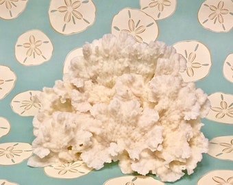 Beach Decor -  Natural Merulina Coral - #5 Coastal Decor 35th Anniversary Gift Sea Shells Seashells