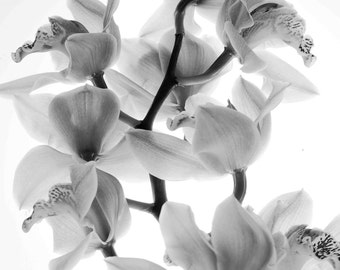 Orchids, black and white photography, minimalist, inspirational, Asian, flowers, macro photography, nature
