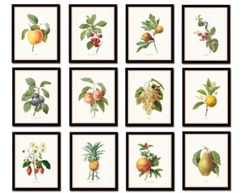 Antique Fruit Print Set No. 1, Redoute Fruit Prints, Giclee, Art Prints, Illustration, Botanical Print Set, Botanical Print, Kitchen Art