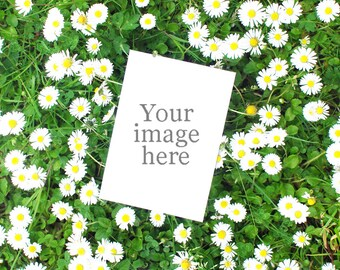Daisy and grass stock image backdrop ideal for A6 greeting card - instant download - product photography - floral backdrops for cards