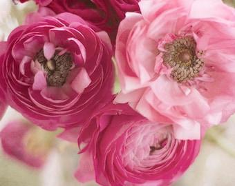 Ranunculus 1 Pink Flowers Fine Art Print Home Decor Wall Art