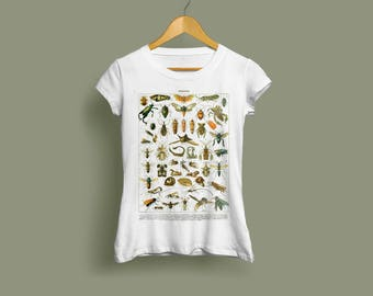 Insects Ladies T-Shirt - Insect Tshirt, Bug Tshirt, Entomology Tshirt, Insect Print, Bug Print, Entomology Print, Vintage Print, Insect Art