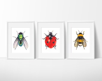 Set of 3 - Green Bottle Fly, Ladybug, and Bee Watercolor Prints