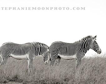 Zebra Print, black and white zebra photography, wildlife photography, wildlife print
