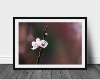 Wall Art Photography Home Decor Floral Print: Apple Blossom