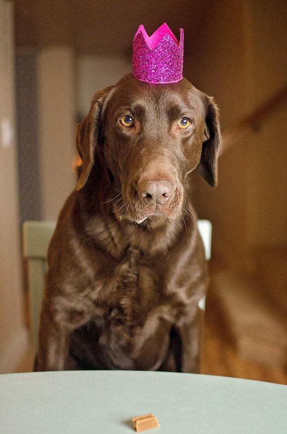 Dog Birthday Crown    Animal Party Hat    Cat Kitty Puppy Pig Birthday Crown Hat    Dog Bandana