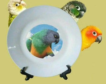 "Senegal Parrot Blue Sky Clouds White Decorative Ceramic 8"" Plate and Display Stand"