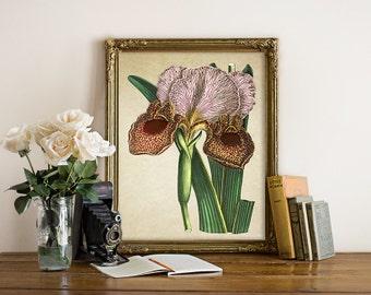 Iris Botanical Print, Iris Art Print, Iris Flower Print, Floral Home Decor, Vintage Natural History Illustration, Iris Reproduction FL100