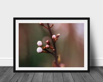 Wall Art Photography Home Decor Floral Print: Apple Blossom II