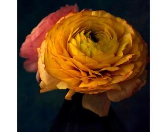 Flower Photography, Ranunculus Print, Orange Flower Wall Decor, French Country, Fine Art Photography, Dark Wall Art