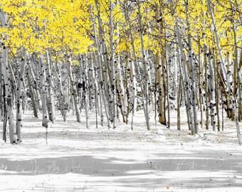 Aspen trees photo, fall wall art, snow, Colorado decor, rustic livingroom decor, log home art, yellow aspen leaves | Snowy Aspen Landscape