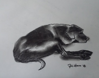 Original charcoal drawing of my dog, Toby, stretching out his long lean legs.