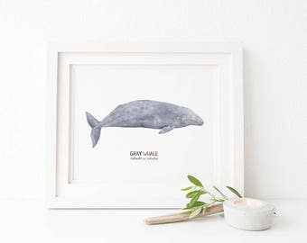 Gray Whale Art Print / Watercolor / Natural History Home Decor / California State Symbols / California Art / Whale Gifts / Whale Art / Whale