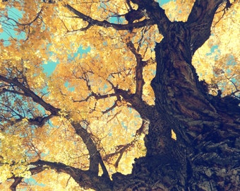 Autumn Attire 8x10 Fine Art Photograph