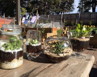Custom made terrariums