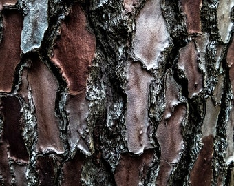 Treebark | Limited edition of 10 | 20 x 20 cm