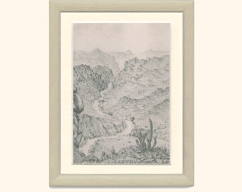 Gifboom Tree, Poison Tree, Ressurection Plant, Agricultural Wasteland, South Africa, Pencil Drawing, EB/1977/40, Frameable Vintage Print