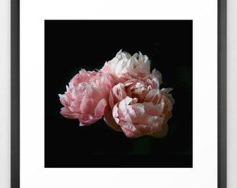 Peony Print or Canvas, Fine Art Photography, Pink Peonies, Shabby Chic, Boho, Floral Wall Art, Square Print 10x10 12x12 16x16 20x20 24x24