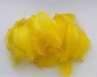 lot de 10 plumes jaune 5-10cm