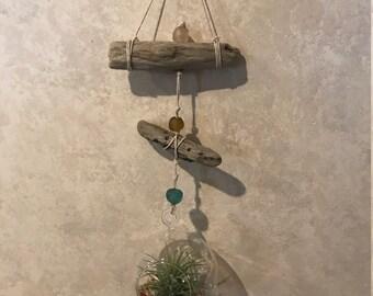 Coastal Decor hanging Air Fern terrarium