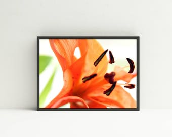 Flower Photography - DIGITAL DOWNLOAD - Orange Tiger Lily Printable Art - Tiger Lily Wall Art - Nature Photography