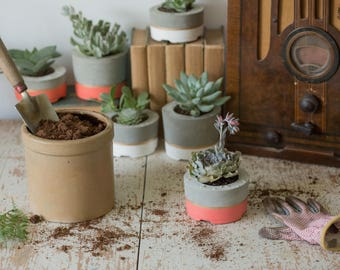 Mother's Day Gift for Her, Medium Concrete Planter, Coral & Gold
