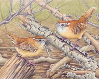 ORIGINAL Watercolor Painting of Carolina Wrens, Bird Painting, Wall Art Home Decor, Wildlife Nature,  FREE SHIPPING