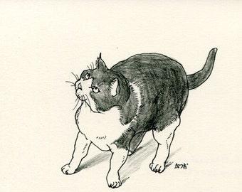 Cat original drawing - P012November2015