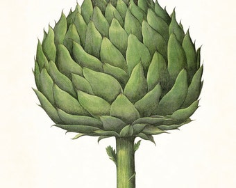 Antique Artichoke No.2 Botanical Print, Giclee, Art Print, Antique Botanical, Vegetable Print, Artichoke Print, Kitchen Art, Illustration