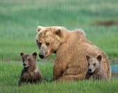 MOM and BABY BEARS Photo ...