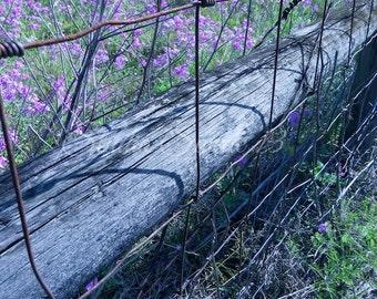 "Nature Photography, Purple Flower Field Photo, Country Living Landscape Print, Rural Farmhouse Art, Purple Wildflower- ""Lavender Fields"""
