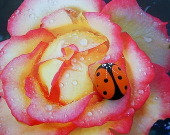 SHIPS FREE-Mothers Day gifts painted pet rocks orange Ladybug spring fairy garden summer garden decor lucky ladybird beetle gift under 20