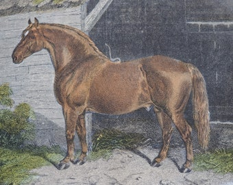 """Equine Hand Coloured Engraving Print """"The Emperor"""" 1859 E.Corbet, E.Hacker Published by Rogerson and Tuxford"""