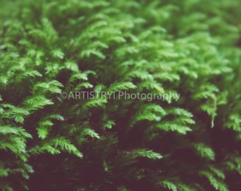 Mother Nature Macro Fine Art Print