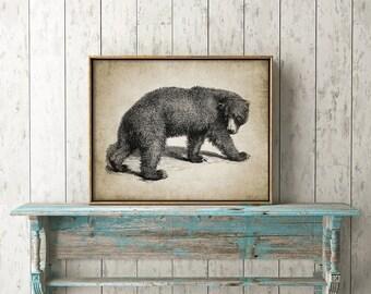 Bear Print - Vintage Bear Illustration - Bear Decor - Bear Wall Art - Digital Art - Printable Art - Single Print #151 - INSTANT DOWNLOAD