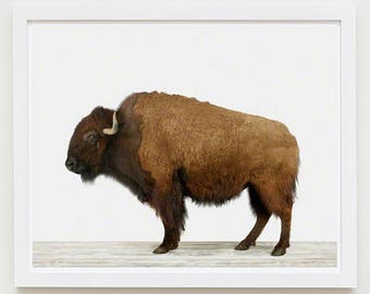 Animal Art Print. American Buffalo. Bird Animal Wall Art. Animal Decor.