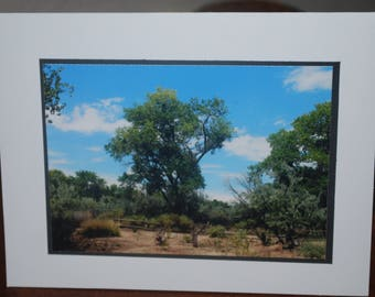 photo card, Rio Grande Nature Center, New Mexico bosque photograph