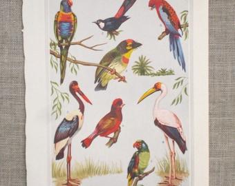 Book Plate , Birds , Strangest Birds in the World , Vintage 1937 National Geographic , Ephemera , Loose Art , Art Supplies , Craft Supplies