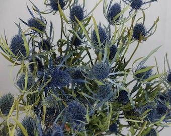 Dried Blue Thistle, Blue Thistle, Dried flowers, Dried flower bunches, Blue flowers, Thistle, Eryngium, Blue wedding, DIY Floral, crafts