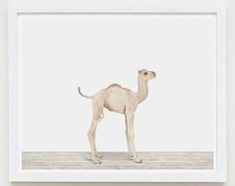 Baby Animal Nursery Art Print. Baby Camel. Safari Animal Wall Art. Animal Nursery Decor. Baby Animal Photo.