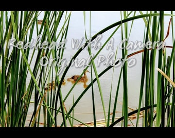 Ducks Through the Grass