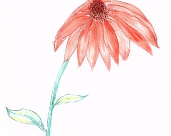 Cone Flower - original watercolor, 9x12